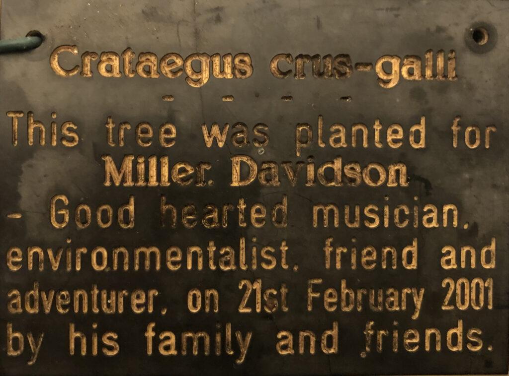 Miller Davison