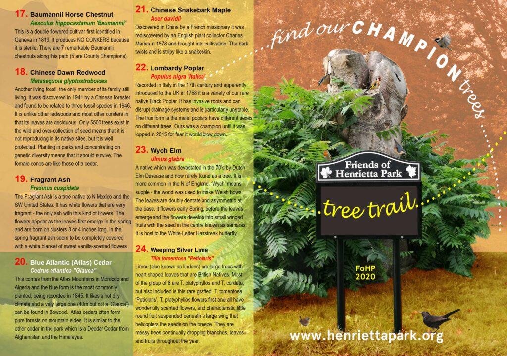 Tree Trail 1
