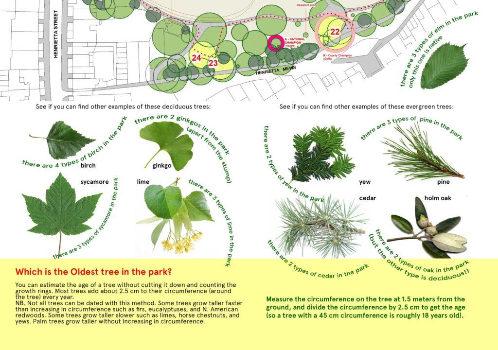 Tree Trail 4